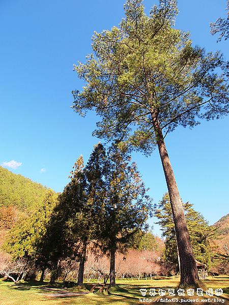 我喜歡這邊的樹木