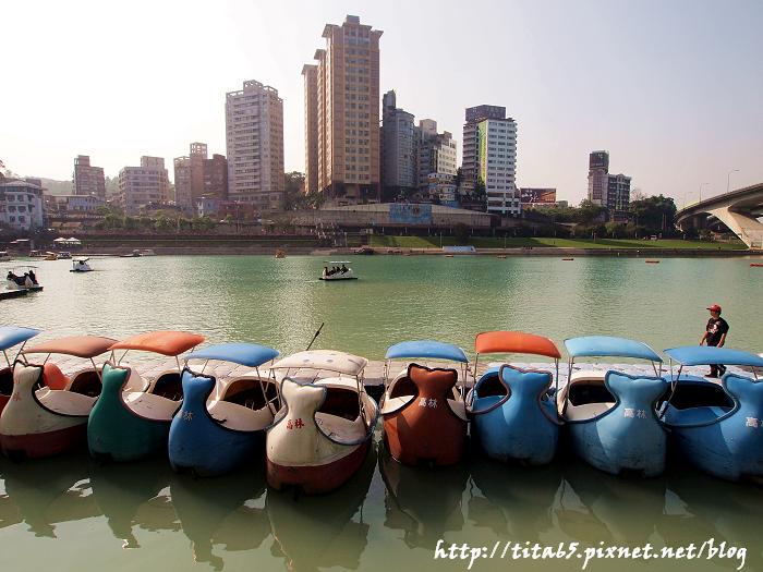 遊湖的天鵝船