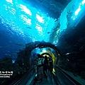 屏東海生館-海底隧道