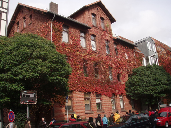 攀滿紅色爬藤的房舍