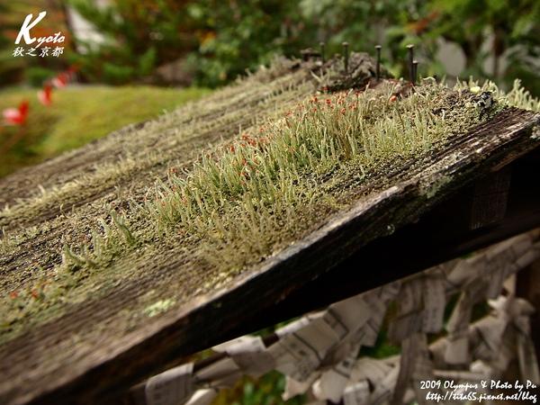 地衣菌類?!反正像苔癬植物可愛小植物