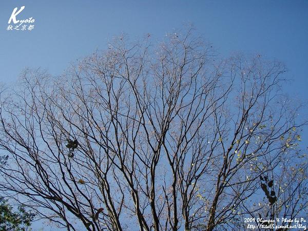 前往大山崎山莊美術館~又是晴朗的一天^^