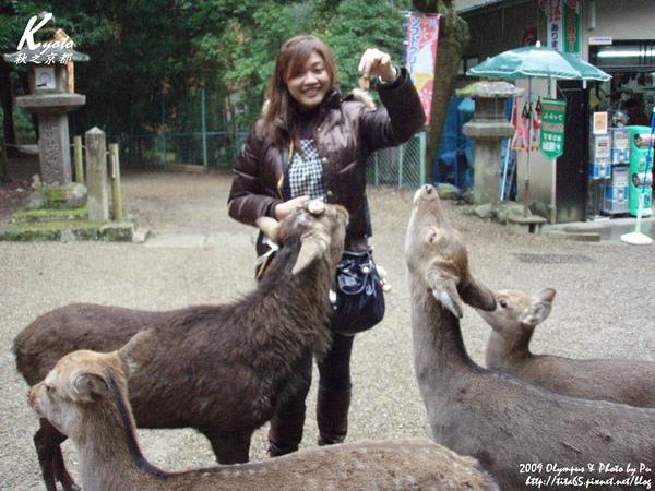 奈良的鹿已經習慣向遊客討鹿餅