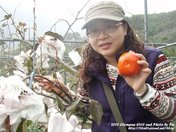 很大的甜柿
