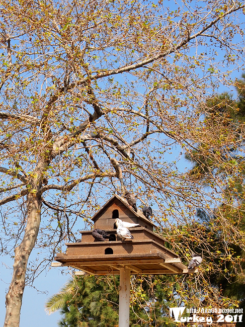 鴿子島旁邊也有鴿子籠~