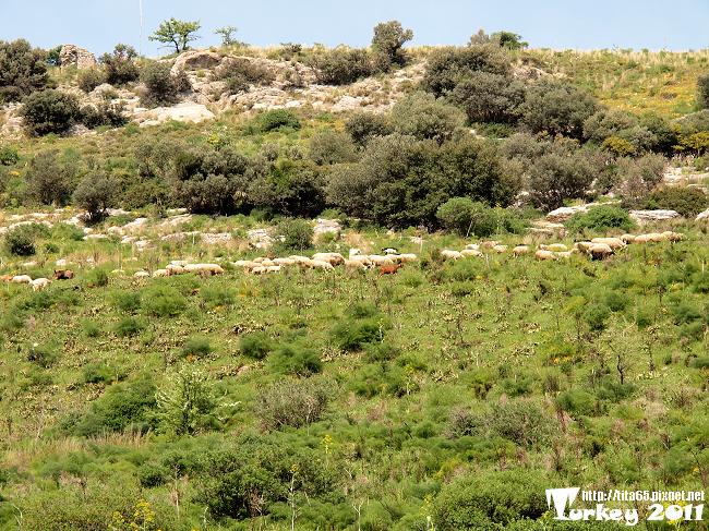 竟然很高ㄉ山坡有羊群~