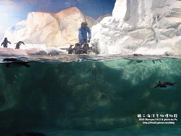 企鵝餵食秀