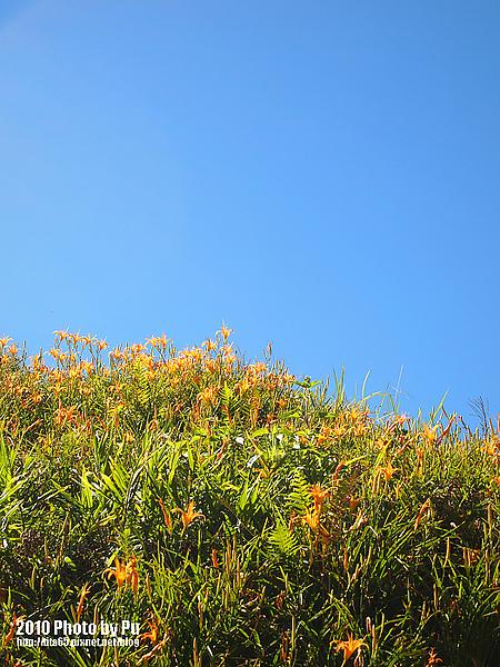 藍天~白雲~我的金針山