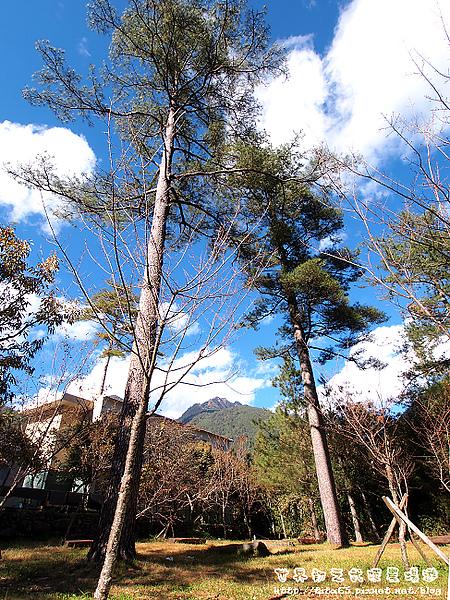 藍天白雲綠樹