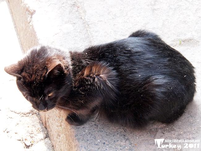 黑貓真是難拍@KUSADASI