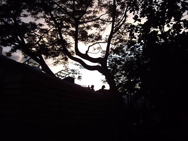15.黃昏的樹.JPG