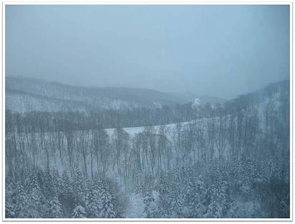 樹冰4-1.jpg