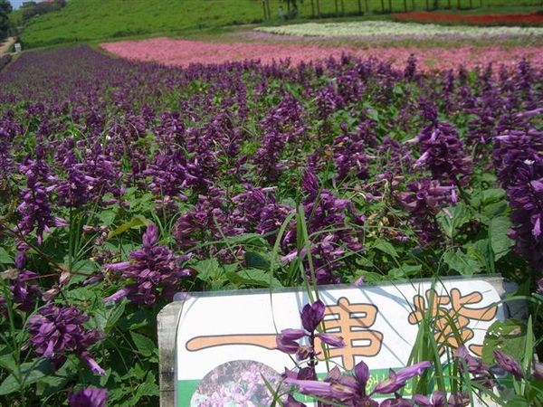 Resize of CIMG2646.jpg