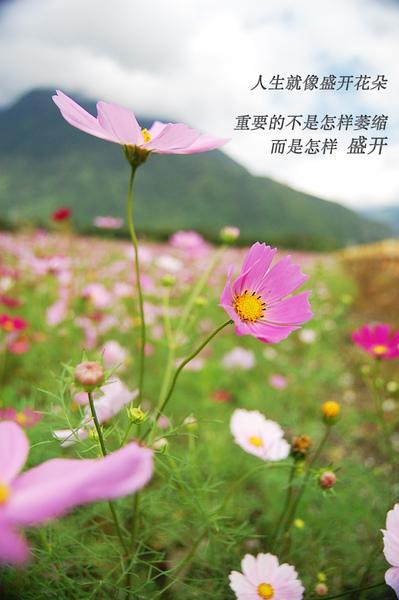 DSC_5023 copy.jpg