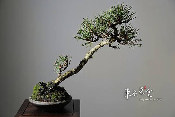 黑松-A01-09.JPG