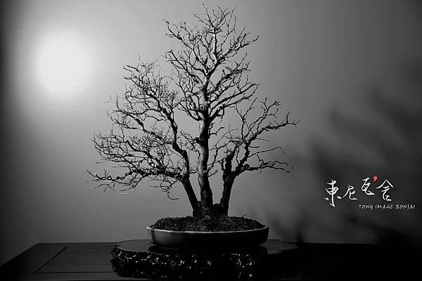 月黑風高03.jpg