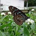 DSC_7395.JPG
