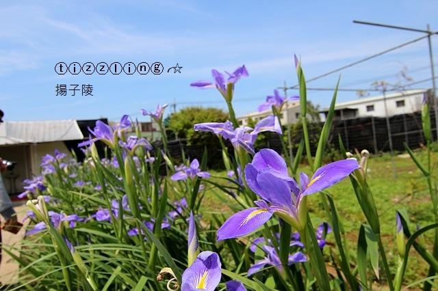 IMG_0551.JPG