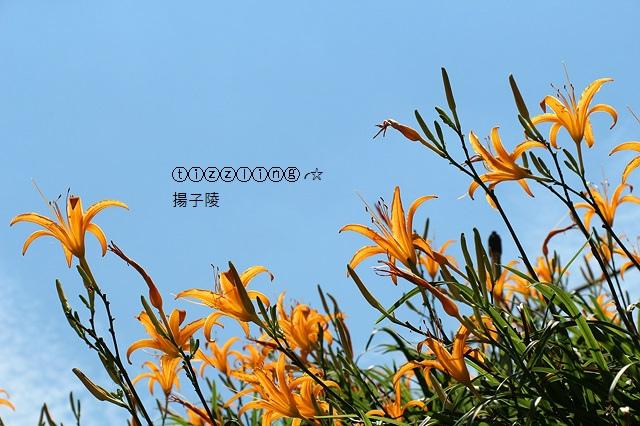 IMG_5092.JPG