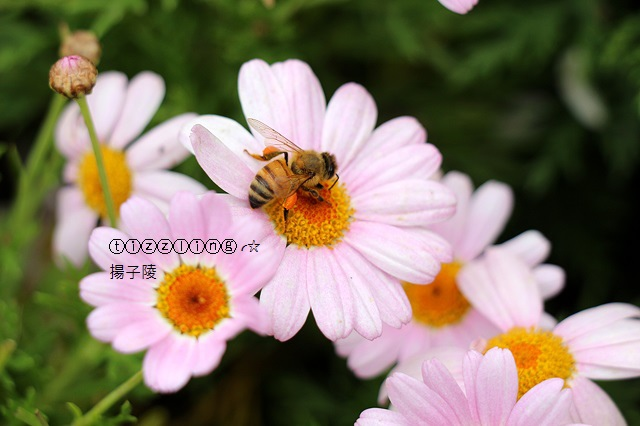 IMG_6395.JPG