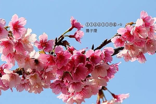 IMG_3269.JPG