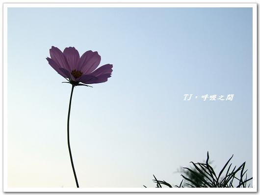 花3.jpg