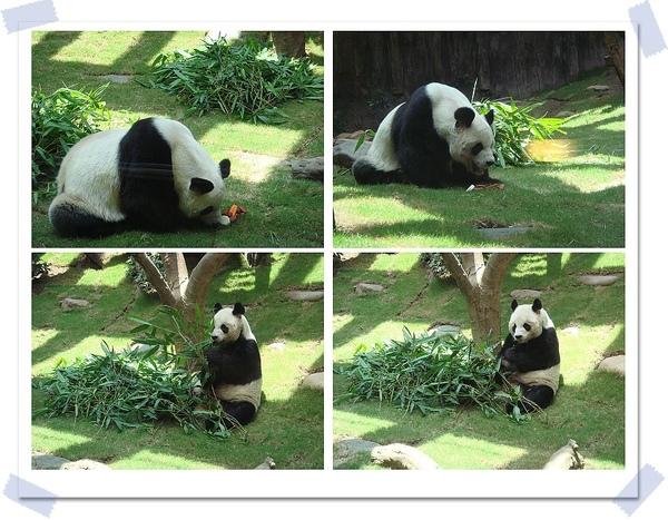 熊貓-1.jpg