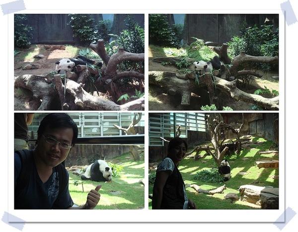 熊貓-2.jpg