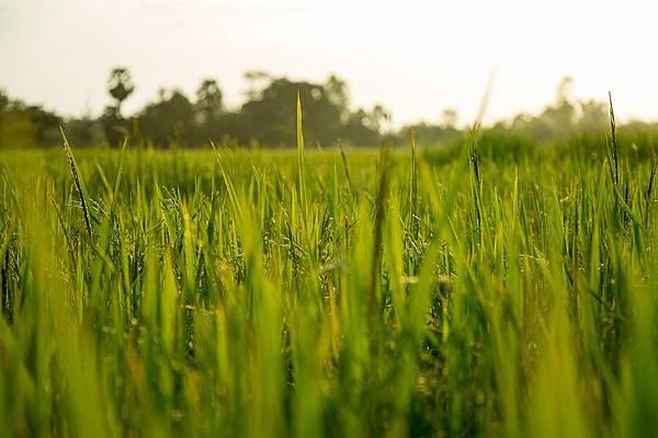 農田水利會