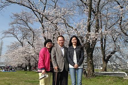 4/1新川洗堰の堤防蛇神社お花見