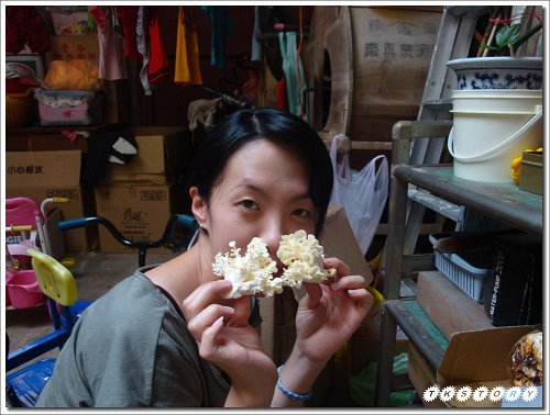20090911-珊瑚菇太空包(早)~07.jpg