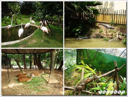 20100522-新竹動物園~06.jpg