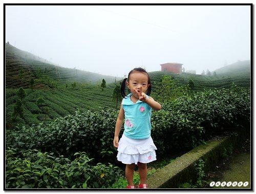 20090725-小半天茶園~21.jpg