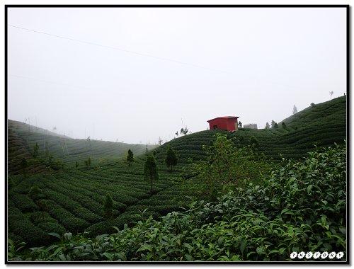 20090725-小半天茶園~26.jpg