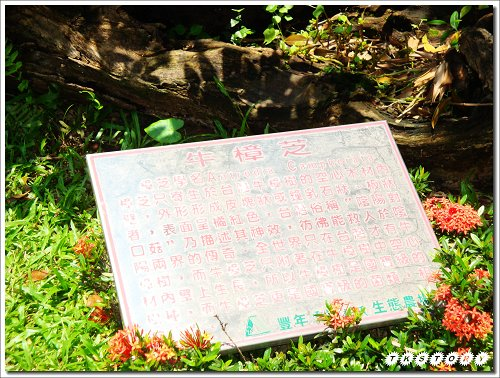 20090825-豐年菇類生態農場~03.jpg