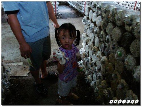 20090825-豐年菇類生態農場~39.jpg
