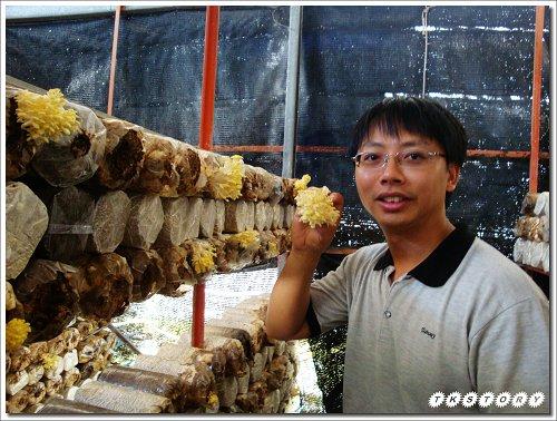 20090825-豐年菇類生態農場~58.jpg