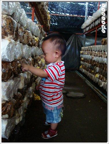 20090825-豐年菇類生態農場~62.jpg