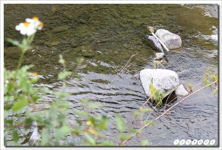 20100307-Canon for 桃山部落~06.jpg