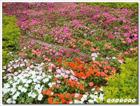 20100404-淡江中學~26.jpg