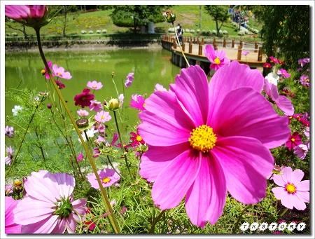 20100425-南投小瑞士花園~64.jpg