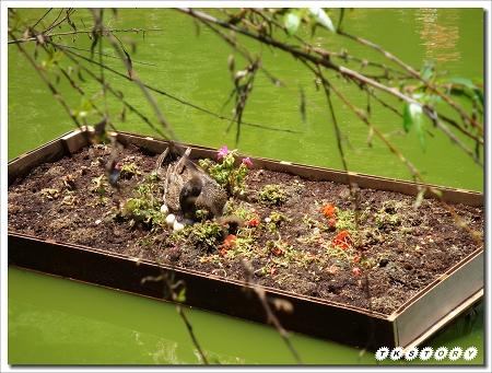 20100425-南投小瑞士花園~82.jpg