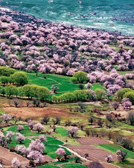 中國-青藏高原