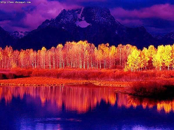 秋季楓葉林