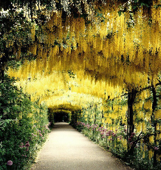 漢普頓宮花園