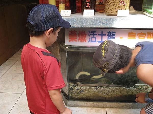 2011年兒華夏令營seession1龍山寺臉譜個人照片 036.jpg