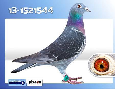 Besseling-13-1521544