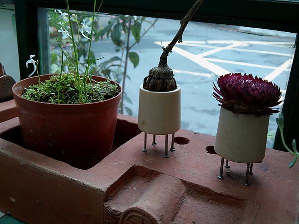 可愛的植物小精靈