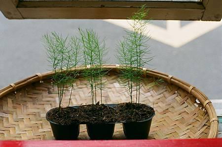 0422世界地球日40週年這天,我們參與了熄燈一小時活動,也贈送給客人一棵小蘆筍