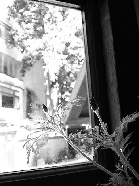 小草與大樹